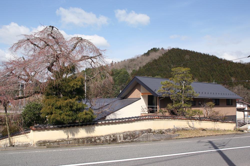 しだれ桜01_1596